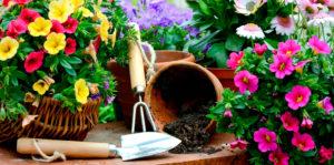 Садовые растения и цветы. Психология цвета